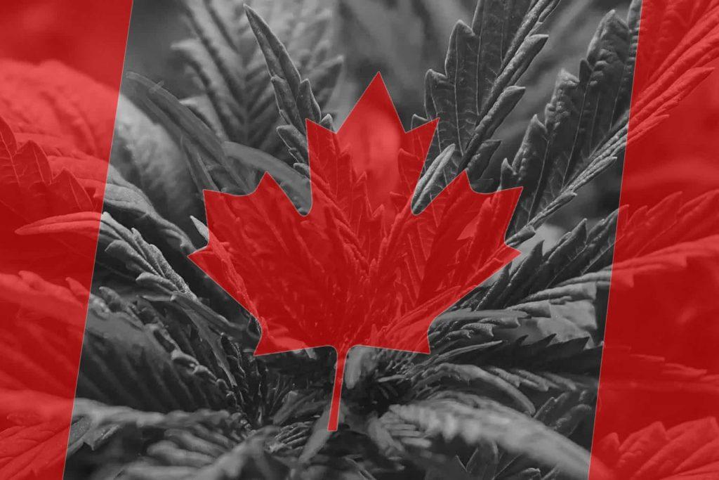 Canadian flag with hemp